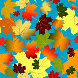 Autumn seamless pattern (vector). Floral seamless blue pattern of colorful maple leaves Stock Images