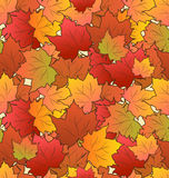 Autumn Seamless Texture of Maple Leaves Stock Images