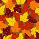 Autumn seamless vector pattern Royalty Free Stock Photo