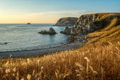 Autumn seascape at dawn. Sea at sunrise and autumn grass Royalty Free Stock Image