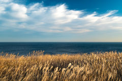 Autumn seascape at sunset. Autumn grass and windy clouds Stock Photography