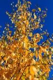 Autumn Season, alberi e foglie di giallo Immagine Stock