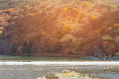 Autumn season at Arashiyama river Kyoto Japan. Natural landscape background Royalty Free Stock Image