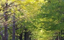 Autumn season background Royalty Free Stock Photo