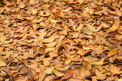 Autumn season background red and yellow leaf falling Stock Image