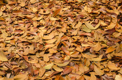Autumn season background red and yellow leaf falling Stock Photo