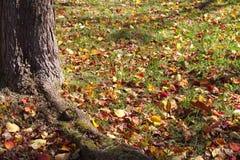 Autumn season background Stock Image