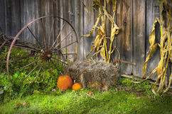 Autumn season barn door. Corn stalks, a bale a hay and some pumpkins are propped to a old barn door for an autumn seaon Stock Images