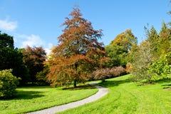 Autumn season Royalty Free Stock Images