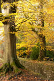 Autumn season Royalty Free Stock Images