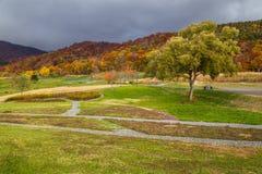 Autumn Season bij de Herfst van Japan Stock Afbeeldingen