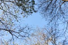 Autumn season change Royalty Free Stock Photo