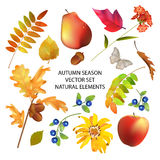 Autumn Season Collection Fotos de archivo libres de regalías