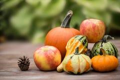 Autumn Season Concept Pumpkins und Kürbisse Stockfotos