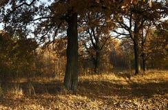The autumn season Stock Photography