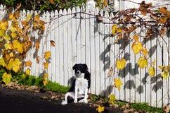 Autumn Season Stock Photography