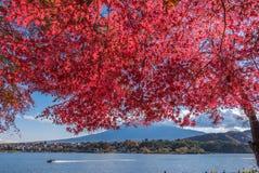 Autumn Season e montagna Fuji nel lago Kawaguchiko fotografie stock libere da diritti