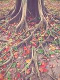 Autumn season Royalty Free Stock Image