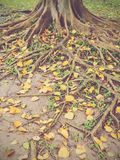 Autumn season Stock Image