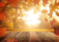 Falling Autumn Leaves On a Wooden Table Background. Autumn season with falling tree leaves and a wooden table background stock photos