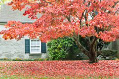 Autumn season - family house with front yard. Family house in Philadelphia suburbs. Front yard with maple tree in fall colors. Picture was taken in November 2011 Royalty Free Stock Images