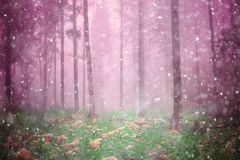 Magic autumn foggy forest landscape stock photo