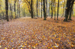 Autumn season in the forest Stock Image
