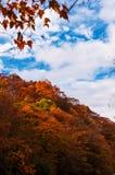 Autumn season forest Royalty Free Stock Photos