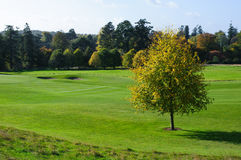 Autumn season on golf course. Beautiful sunny autumn day  on a golf course Stock Image