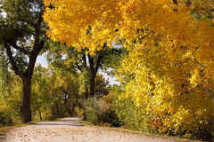 Autumn Season and Gravel Road Royalty Free Stock Photography