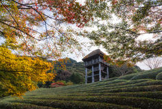 Autumn season,green dwarf plants in the japanese garden and view Royalty Free Stock Photos