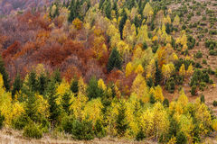 Autumn season hillside, covered with colorful trees Royalty Free Stock Photo