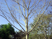 Autumn season impact on tree. Picture of leafless tree in autumn stock image