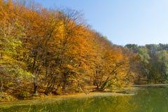 Autumn season landscape Stock Photography