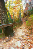 Autumn season landscape of a wooded trail in the mountains Stock Images