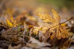 Autumn season leaf. A leaf on ground in autumn season back light Stock Photo