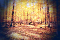 Autumn season mood Royalty Free Stock Images
