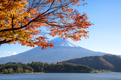 Autumn season of Mt. Fuji. Mt. Fuji framed with autumn red leaves in Japan Royalty Free Stock Images