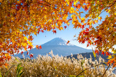 Autumn season of Mt. Fuji. Mt. Fuji framed with autumn red leaves in Japan Stock Image