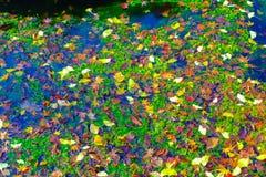 Autumn season at Naejangsan National Park, South Korea. Beautifu royalty free stock photos
