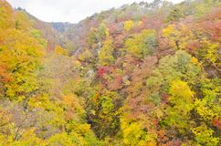Autumn Season in Naruko Gorge Royalty Free Stock Photos