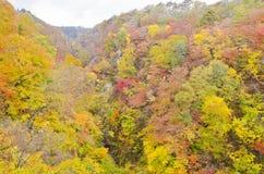 Autumn Season in Naruko Gorge Royalty Free Stock Photos