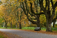 Autumn season in Netherlands Stock Photos