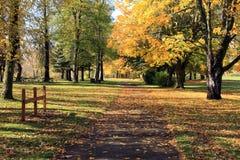 Autumn season, NW Oregon. Royalty Free Stock Image