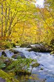 Autumn Season in Oirase-Dampf Stockfotos