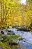 Autumn Season in Oirase Steam Stock Photos