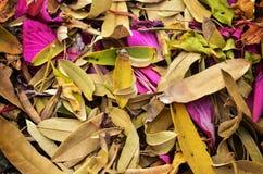 Autumn season orange leafs Stock Photo
