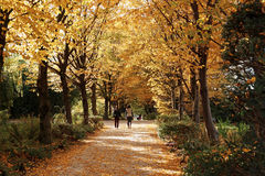Autumn season in The Parc André Citroën Royalty Free Stock Image