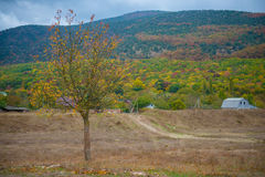 Autumn season in Russia Lonely beautiful  tree.  Landscape. Stock Image