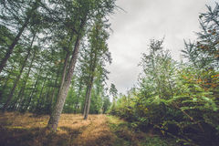 Autumn season in a Scandinavian forest. With colorful trees Stock Photography